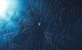 Spider web in cool tone. Background Stock Photography