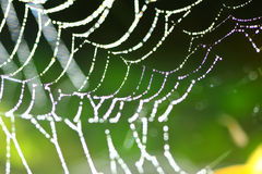 Spider Web Covered Stock Photography