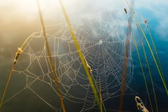 Spider web covered in dew drops, colorful background royalty free stock images