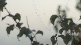 Spider web covered in dew stock footage