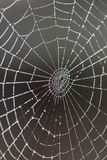 Spider web covered  by dew Stock Photography