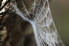 Spider web covered in frost Stock Image