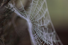 Spider web covered in frost Royalty Free Stock Image