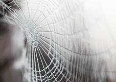 Spider web covered in frost Stock Photography
