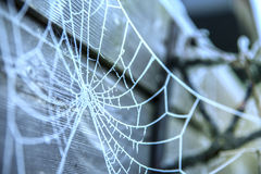 Spider web covered with frost Royalty Free Stock Photo