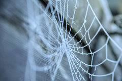 Spider web covered with frost Stock Photography