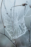 Spider web covered with frost Royalty Free Stock Image