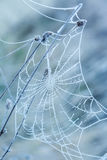 Spider web covered with frost stock photos