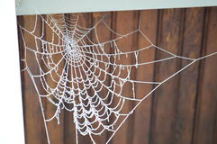 Spider Web Covered In Hoar Frost Stock Image