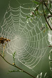 Spider web. A spider web covered with morning dew Stock Images