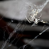 Spider on web Stock Image