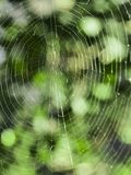 Spider web with a dark green background and out of focus stock image