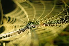 Spider web. At dawn sun Stock Image