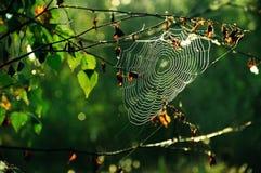 Spider web4. Spider web at dawn sun Stock Image