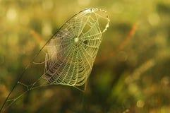 Spider web5. Spider web at dawn sun Stock Photos
