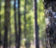 Spider& x27 ; Web de s Photographie stock libre de droits