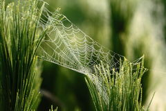 Spider web. Detail photo of spider web with water stings Stock Image