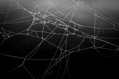 Spider web. Detailed web of a spider royalty free stock photos