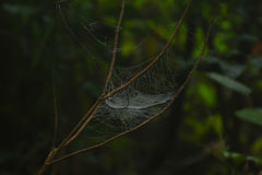 Spider web details and natural colors Stock Photos