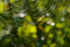 Spider-web with dew 12 Royalty Free Stock Photography