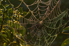 Spider web in the dew. Royalty Free Stock Photos