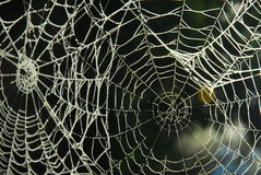 Spider web with dew. A closeup view of an intricate spider web with early morning dew highlighting each strand of the web Stock Images