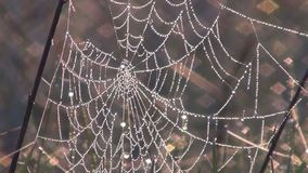 Spider web stock video footage