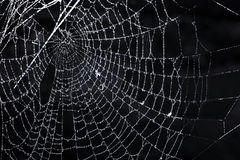 Spider web with dew Stock Image
