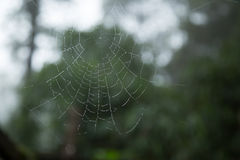 Spider web and dew drop. Royalty Free Stock Photo