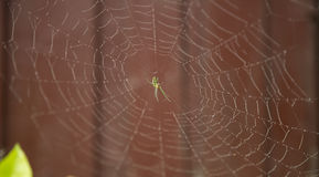 Spider web and dew drop. Royalty Free Stock Images