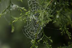 Spider web and dew drop. Stock Photos