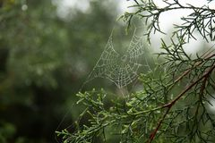 Spider web and dew drop. Stock Image