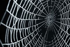 A Spider Web With Dew Drops Stock Photo