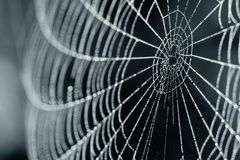 Spider Web With Dew Drops Stock Photography