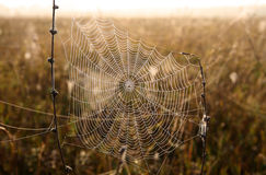 Spider web with dew drops Royalty Free Stock Images