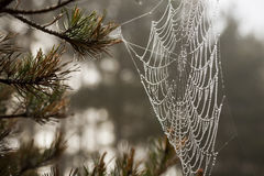 Spider web with dew drops. Autumn melancholy. Royalty Free Stock Photography