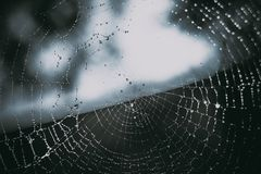 Spider web and dew drops background stock photography