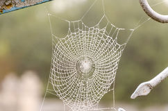 Spider web with dew drops closeup. Spider web with dew drops close-up. At dawn royalty free stock photos