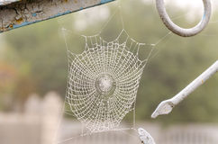 Spider web with dew drops closeup. Spider web with dew drops close-up. At dawn stock photography