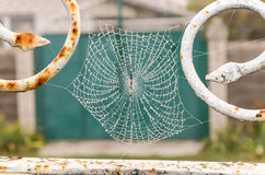 Spider web with dew drops closeup. Spider web with dew drops close-up. At dawn stock photos