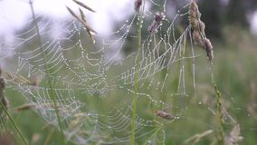 Spider web with dew drops stock video