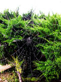 Spider Web Royalty Free Stock Image
