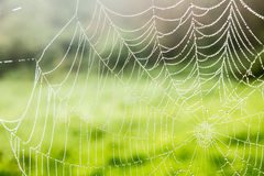 Spider web with dew drops Royalty Free Stock Photography