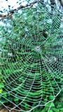 Spider web with dew drops. Spider web macro Stock Photo