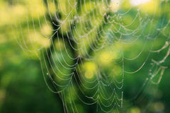 Spider web with dew drops. Morning cobweb with dew drops stock photography