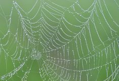 Spiders Web and  Dew Drops with green background Stock Image