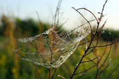 Spider web with dew drops on plants in sunlight. Macro photography. Outdoors, outside stock photography