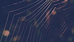 Spider Web with dew drops royalty free stock photos