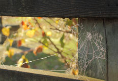 Spider Web and Dew Royalty Free Stock Photos