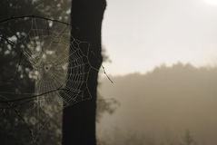 Spider web with dew in morning sunrise landscape Stock Photography